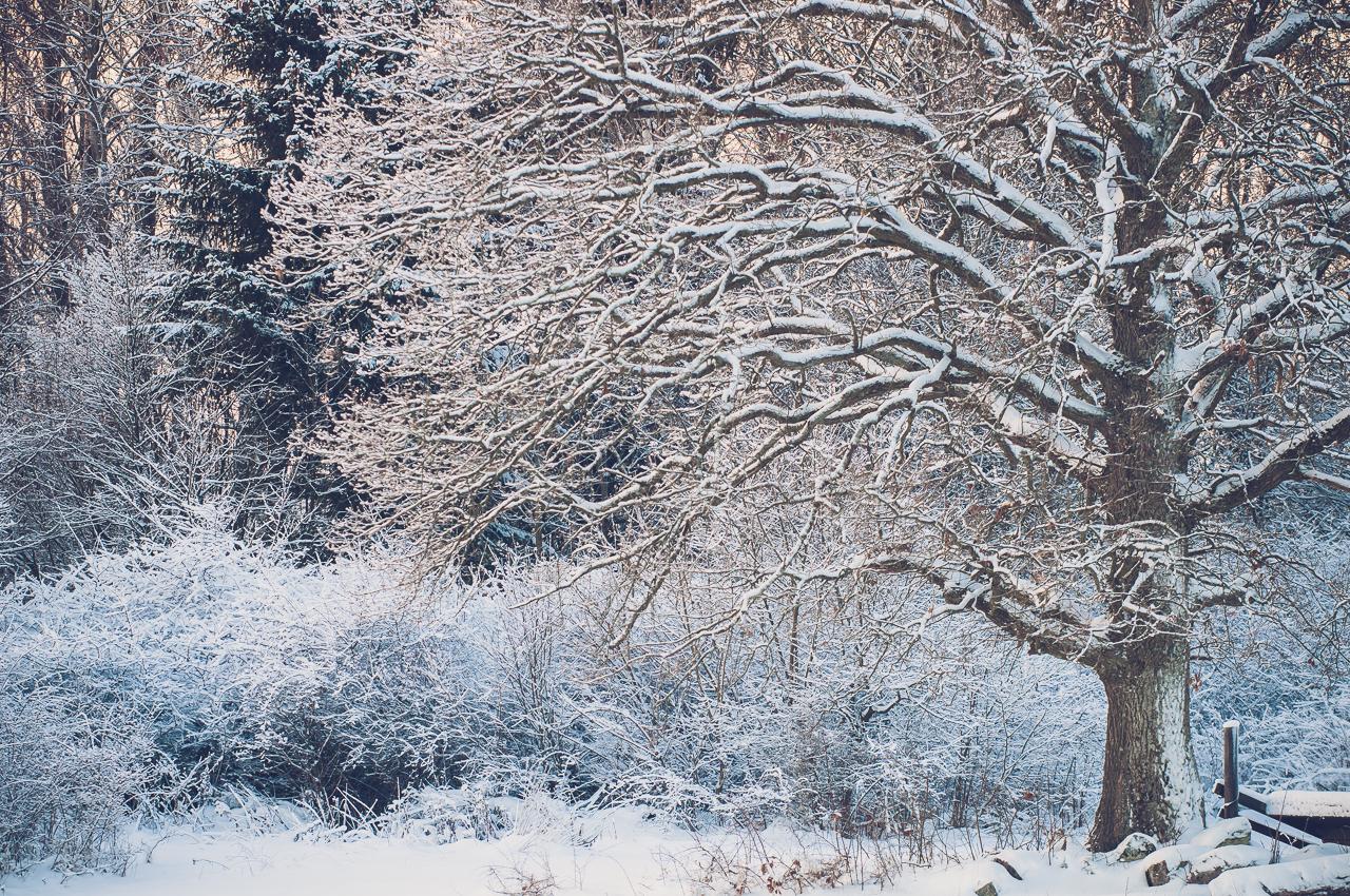 wintertree-10575
