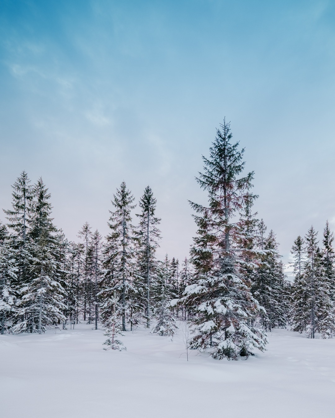 Vyer i Säfsen, Dalarna. Skidåkning i Säfsen Alpin. Svenska resebloggar med Från tekopp till bergstopp